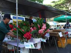 Market11